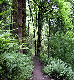 300px-Forest_park_wildwood_trail_in_early_summer_P2860