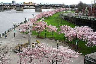 Waterfront_Park_Portland